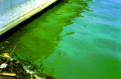 霞ヶ浦の水質汚濁が始まった頃